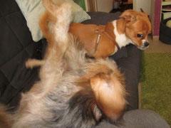 Machtkampf auf dem Sofa!