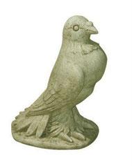 Pigeon S 190 H 24