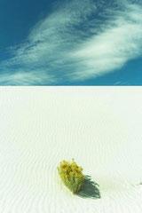 White sand Usa