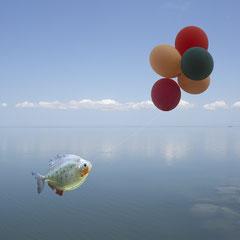 fish and balloon