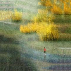 Les Genets/ Digital color Landscape ,edition limited 1/20