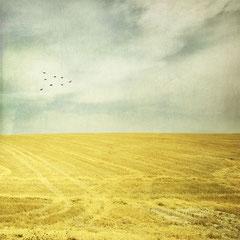 Yellow life in Andalousie, Digital color Landscape Spain photoshop CC