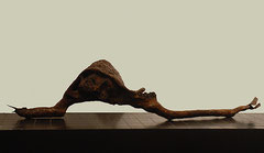 Caracol, 2002, 21x95x21 cm, Holz, Kaktus, Schwamm, Jakaranda