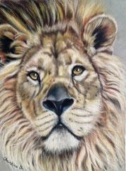 """EYES of OLES (lion du Parc des Félins) - voir dans rubrique """"PAS à PAS"""" (Pastel)"""