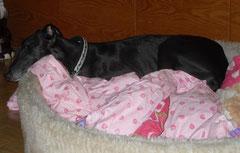 auch noch mit Blitzlicht - ich schlafe!!!!