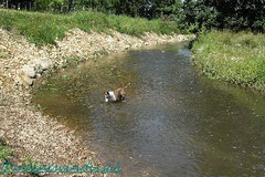 Kleiner Hund im großen Fluß...:)