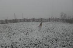 Lucy im Nebel - Luuucy - bist du noch daa?