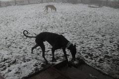 Nebel & Schnee - ratet mal, wo Rayo grad hin will ;)
