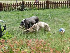 die 'Herrschaften' beim eifrigen Schnüffeln