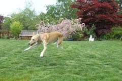 und die fliegende Lucy