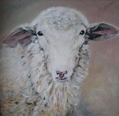 50 x 50 Schaf