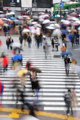 Shibuya crossing - Tokyo