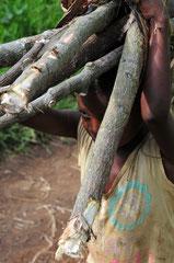 Bigodi - Kibale National forest