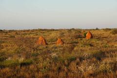 Termitenhügel nahe der Coral Bay, WA