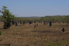 Magnetische Termiten hinterlassen schmale nach der Sonne ausgerichtete Bauten