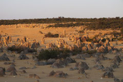 Nambung NP - Pinnacles bei Cervantes, Westaustralien