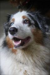Bensheimer Weinlagen,T-Dogs,20.10.13, Foto Nr.18