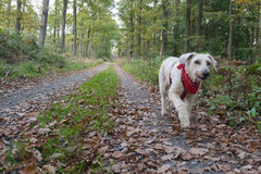 Kapersburg+Winterstein, T-Dogs, 5.10.2014, Foto Nr. 23