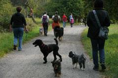 Hundeschulausflug-Sicher auf 4 Pfoten-28.9.13 Foto Nr.11