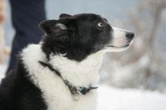 Altkönig,T-Dogs,01.2.2014, Foto Nr.16