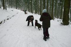 Altkönig,T-Dogs,01.2.2014, Foto Nr.8