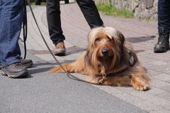 Mantrailing+Wandern Rhön,T-Dogs,30.4.-3.5.2015 Foto Nr.32