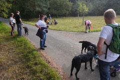 Hundeschulausflug Sicher auf 4 Pfoten, Grüner See, 28.9.14, Foto Nr.10