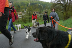 Fischbachtal, T-Dogs 4.5.13, Foto Nr.17