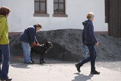 Mantrailing+Wandern Rhön,T-Dogs,30.4.-3.5.2015 Foto Nr.25