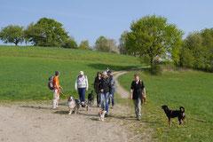 Rund um Lindenfels, T-Dogs,12.4.2014, Foto Nr.1