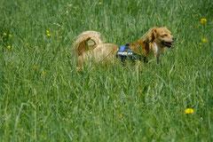 Bensheimer Weinlagen, T-Dogs, 5.5.13, Foto Nr.10
