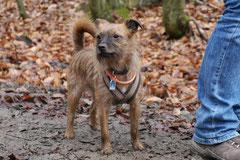 Schmitten zur Landsteiner Mühle,T-Dogs, 11.1.2014,Foto Nr.4