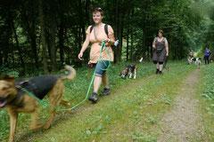 Wispersee, T-Dogs,28.07.2013, Bild Nr.2
