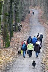 Hofheimer Kapellenberg,T-Dogs,15.12.2013, Foto Nr.12
