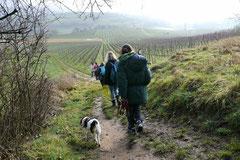 Bensheimer Weinlagen, T-Dogs, 25.1.14, Foto Nr.14