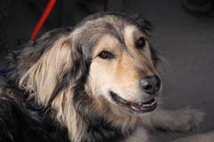 Assmannshäuser Höllenberg, T-Dogs, 17.5.2015 Foto Nr.11