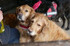 Irrbachquelle,T-Dogs,26.1.14, Foto Nr.8