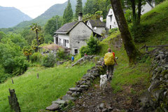 Schweiz-Tessin,T-Dogs,Mai 2014 Foto Nr.15