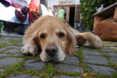 Grünwiesenweiher Welttierschutztag, T-Dogs, 4.10.2014 Foto Nr.20