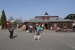 Rheingauen Gebück,T-Dogs,29.+30.3.14, Foto Nr.33