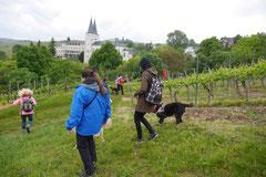 Himmelssteig+Mühlenweg,T-Dogs,10.5.14,Foto Nr.23