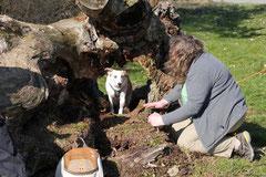 Zur Grube Glück-auf, T-Dogs,9.3.14, Foto Nr.11