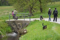 Rhön Frühlingserwachen,T-Dogs,3.+4.5.2014, Foto Nr.11