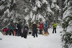 Altkönig,T-Dogs,01.2.2014, Foto Nr.6