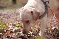 Taunushöhen,T-Dogs,18.4.2015 Foto Nr.4