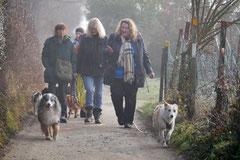 Bensheimer Weinlagen, T-Dogs, 25.1.14, Foto Nr.3