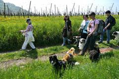 Bensheimer Weinlagen, T-Dogs, 5.5.13, Foto Nr.8