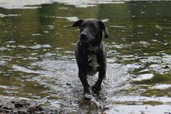 Hundeschulausflug Sicher auf 4 Pfoten, Grüner See, 28.9.14, Foto Nr.16