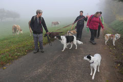 Fischbachtal,T-Dogs,23.11.2014, Foto Nr.7