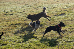 Weiltal, T-Dogs, 7.12.2014, Foto Nr.8